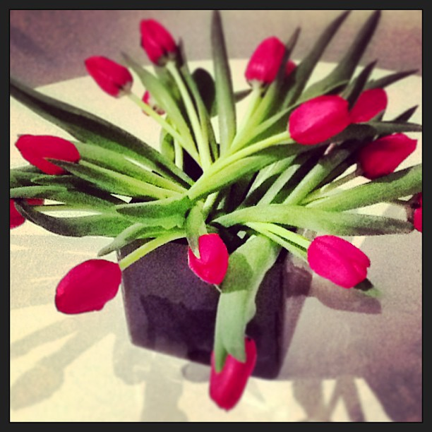 Red tullips placed in a black cube planter as a fresh and fun centerpiece.