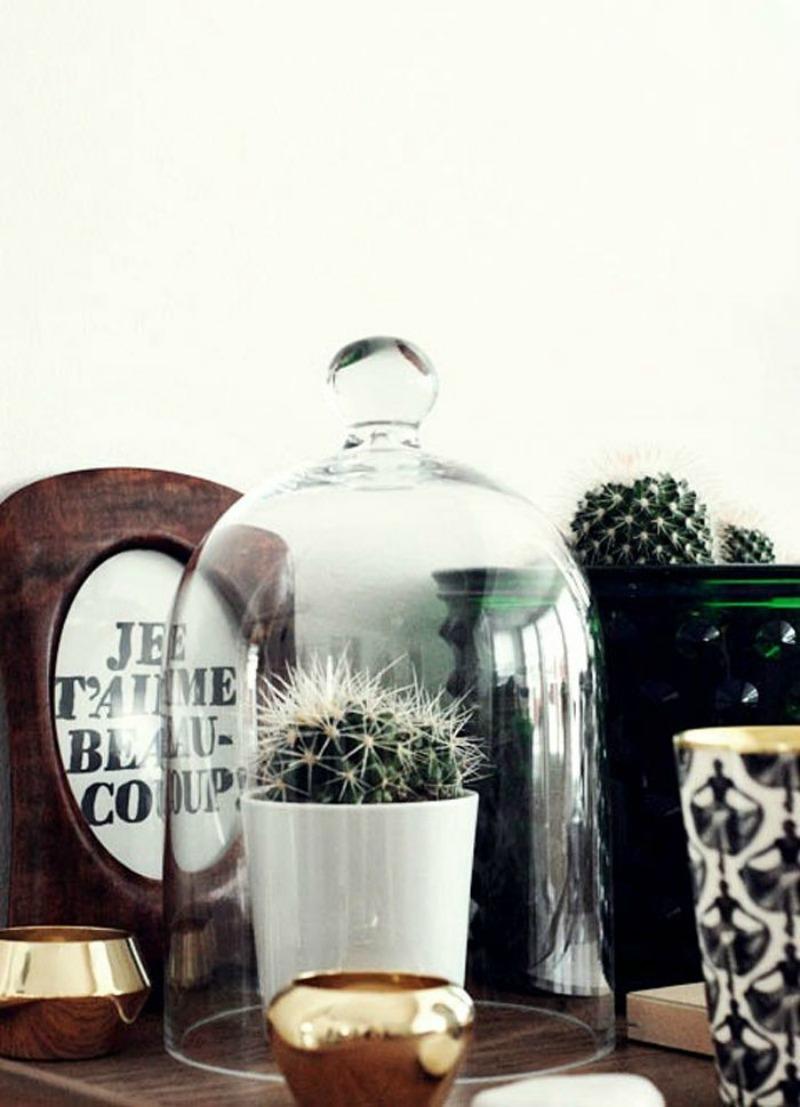 cactus 800