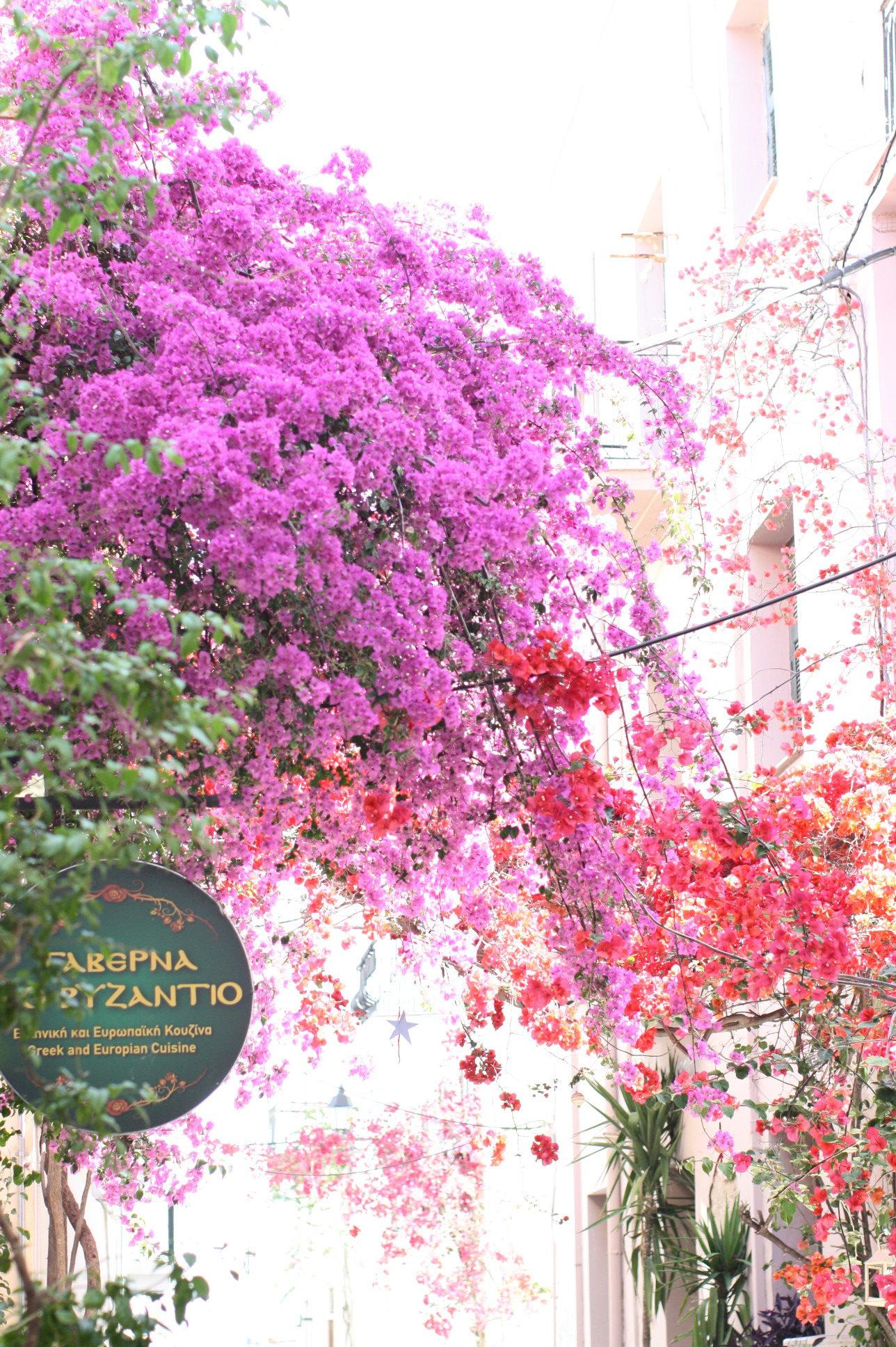 Nomad Luxuries in Nafplio Greece under flowers in the Mediterranean Summer