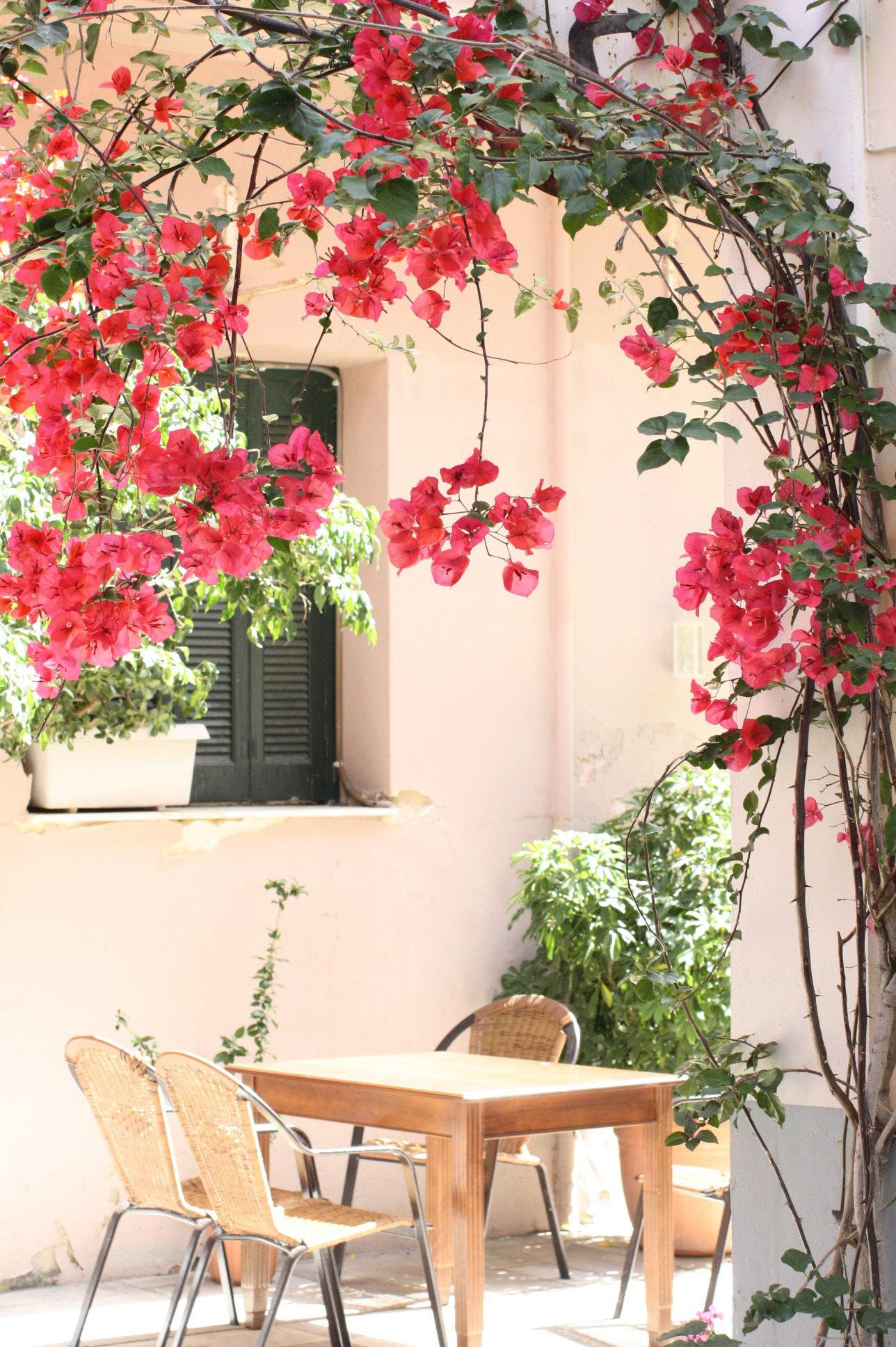 NoMad Luxuries in Nafplio Greece under flowers in the Mediterranean