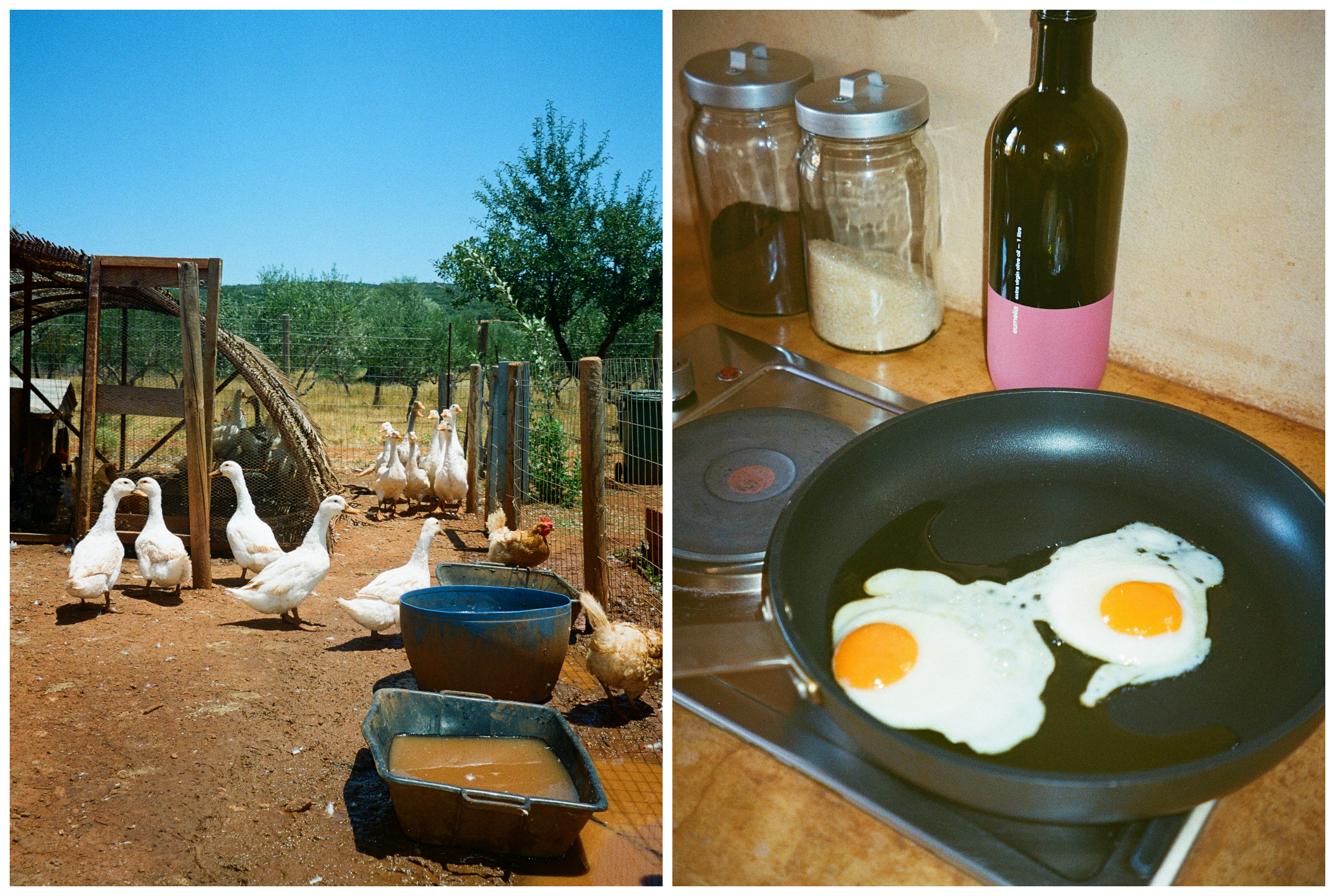 A WEEKEND AT EUMELIA AGROTOURISM FARM