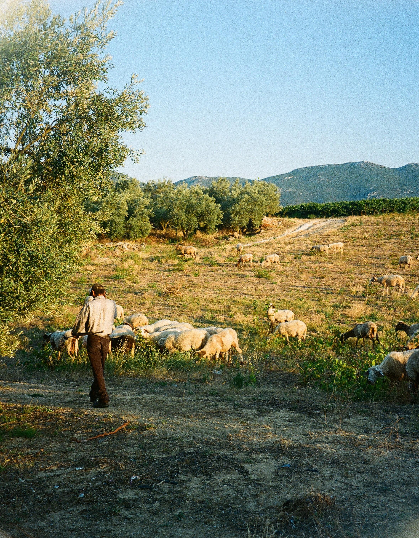 A WEEKEND AT EUMELIA AGROTOURISM FARM