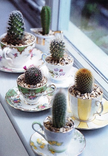 Tea cup planters for prickly cacti for a unique and fun decor idea.